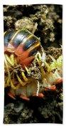 Millipede Polydesmida - Sigmoria Aberrans Beach Towel