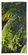 Mimosa At Sunset Beach Towel