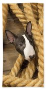 Miniature Bull Terrier Puppy Beach Towel