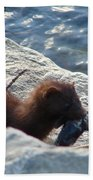 Mink With A Round Goby Beach Sheet