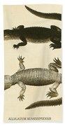 Mississippi Alligator Beach Towel