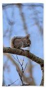Mister Squirrel Beach Towel
