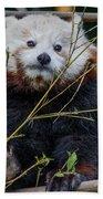 Mohu The Teenage Red Panda Beach Towel