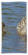 Momma Mallard And Her Ducklings Beach Towel