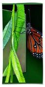Monarch Butterfly 04 Beach Sheet