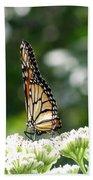 Monarch Butterfly 72 Beach Towel