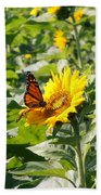 Monarch Butterfly And Guest Beach Towel
