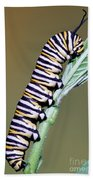 Monarch Butterfly Caterpillar Beach Towel
