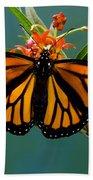 Monarch Butterfly Danaus Plexippus Beach Towel