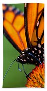 Monarch Butterfly Headshot Beach Sheet