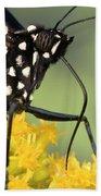 Monarch Butterfly Male Feeding Beach Towel