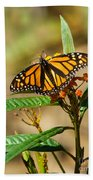 Monarch Butterfly On Plant With Eggs Beach Towel