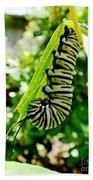 Monarch Caterpillar 5 Beach Towel