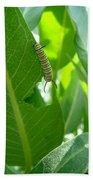 Monarch Caterpillar Beach Towel