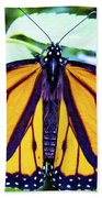 Monarch I Beach Towel