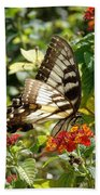 Monarch Pause Beach Towel