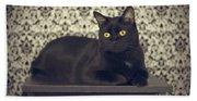 Mongo The Robust Cat Beach Sheet