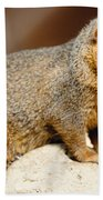 Mongoose Beach Towel