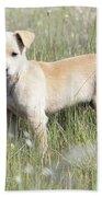 Mongrel Dog Puppy Beach Towel