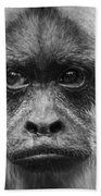 Monkey Eyes Beach Towel
