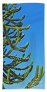 Monkey Puzzle Tree Beach Towel