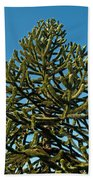 Monkey Puzzle Tree E Beach Towel