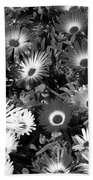 Monochrome Asters Beach Towel