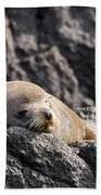 Montague Island Seal Beach Towel