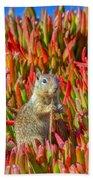 Monterey Squirrel Beach Towel