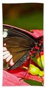 Montezuma Cattleheart Butterfly Beach Towel