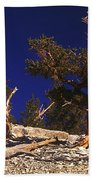 Moon And Bristlecone Pines Beach Towel