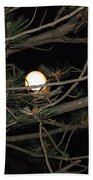Moon Through Pines Beach Towel