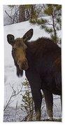 Moose   #1612 Beach Towel