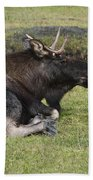 Moose At Rest Beach Towel