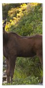 Moose Baby Sniffing Morning Air Beach Towel