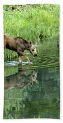 Moose Calf Testing The Water Beach Towel