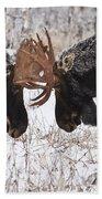 Moose Fighting, Gaspesie National Park Beach Towel