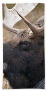 Moose Pictures 101 Beach Towel