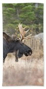 Moose Pictures 75 Beach Towel