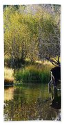 Moose Reflection Beach Towel