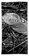Morning Dew Beach Towel by Bob Orsillo