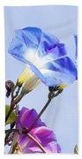 Morning Glory Flowers Beach Towel