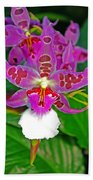Morning Joy Orchid Beach Towel