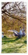 Morning Stretch - Impressions Beach Towel