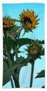 Morning Sunflowers Beach Towel