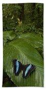 Morpho Butterfly In Rainforest Ecuador Beach Towel