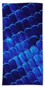 Morpho Butterfly Scales Beach Towel