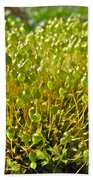 Moss And Fruiting Bodies - Green Lane Pa Beach Towel