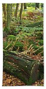 Moss Covered Logs On The Forest Floor Beach Towel