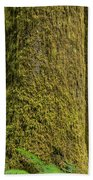 Moss Covered Tree Olympic National Park Beach Towel